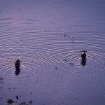 Die Büffel im Turkana See