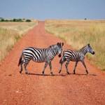 Kenia entdecken und erleben