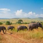 Afrikanische Elefantenfamilie in Maasai Mara, Kenia